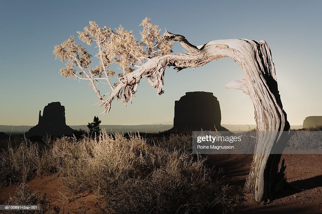 USA, Utah, Monument Valley, dead tree : Stockfoto