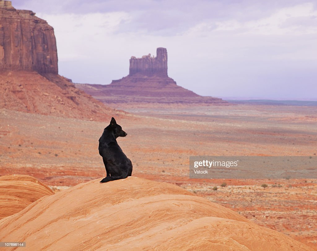 USA, Utah, Monument Valley, Dog sitting on rock