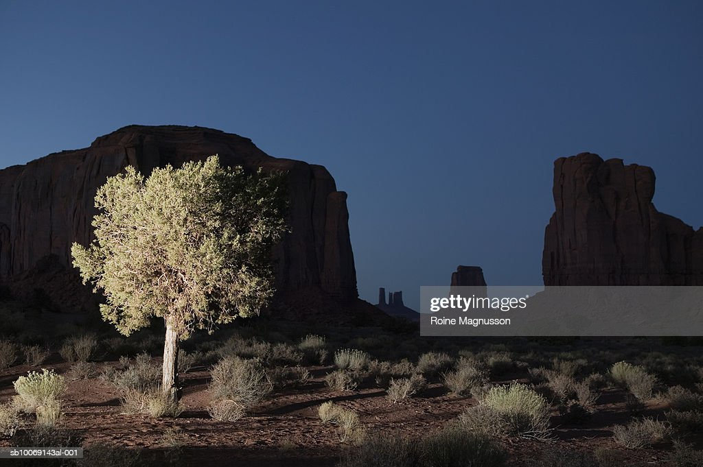 USA, Utah, Monument Valley, illuminated tree : Stockfoto
