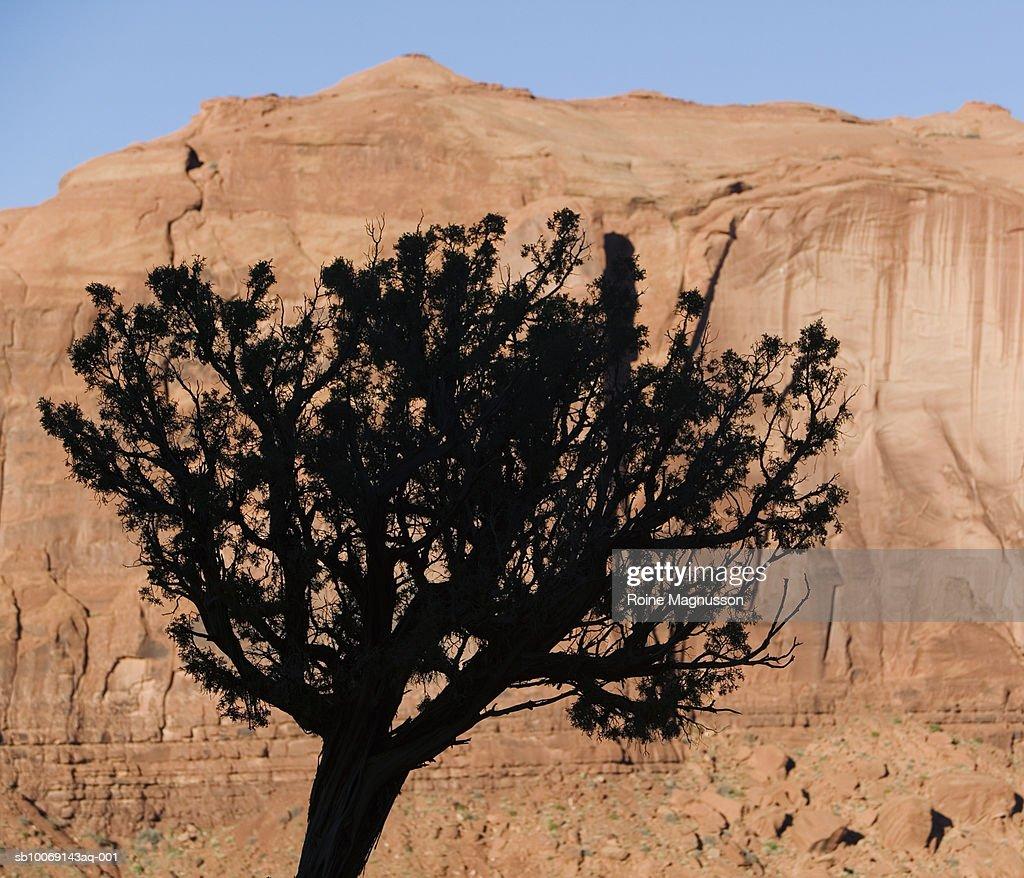 USA, Utah, Monument Valley, silhouette of tree against rock : Stockfoto