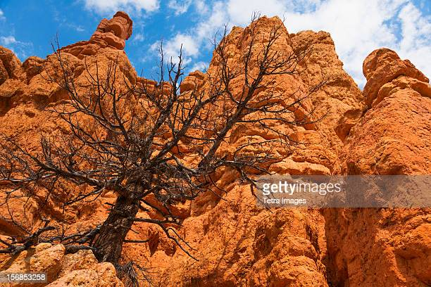 USA, Utah, Red Canyon, Dead tree on rock