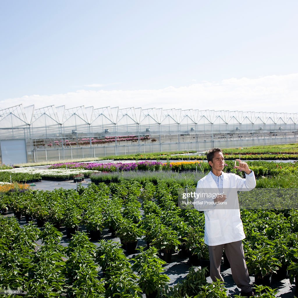 Usa Utah M Scientist Examining Sample In Plant Nursery Stock Photo