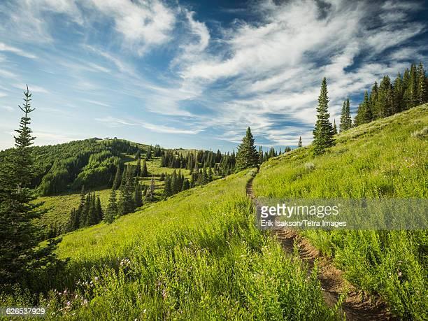 USA, Utah, Salt Lake City, Footpath through meadow
