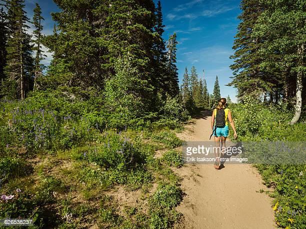 USA, Utah, Salt Lake City, Mature woman walking in forest