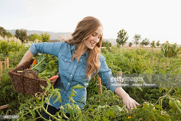 usa, utah, salt lake city, portrait of young woman harvesting vegetables - harvest basket stock pictures, royalty-free photos & images