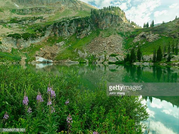 usa, utah, wasatch national forest, cecret lake - national forest stock pictures, royalty-free photos & images
