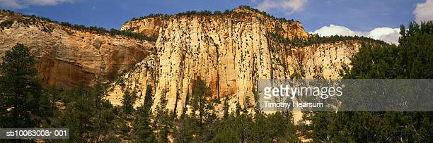 usa, utah, zion national park, mountain and trees - timothy hearsum stock pictures, royalty-free photos & images