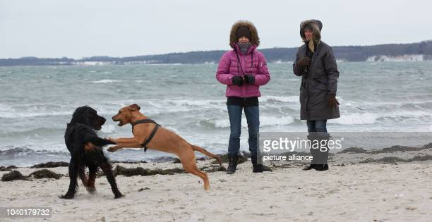Ute TueerpeDirksen and Marion Steffensen look at their dog Sam  and Amy on the south beach of Eckernfoerde Germany 22 January 2013 Photo Georg Wendt...