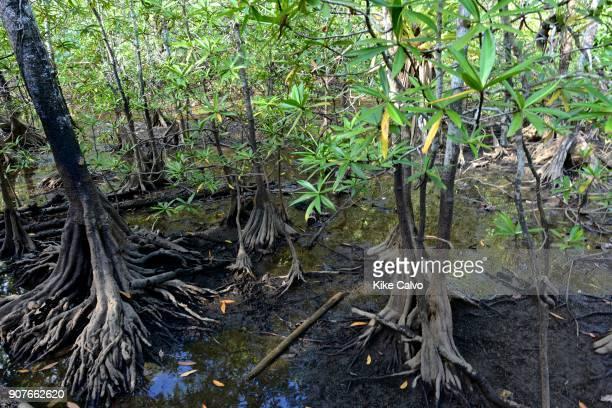 Utria National Park Estero Sector with Tea mangroves
