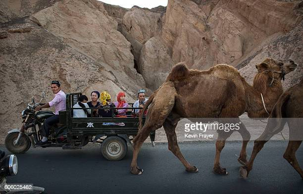A Uyghur family ride passed a camel on a road during the Corban Festival on September 12 2016 in Turpan County in the far western Xinjiang province...