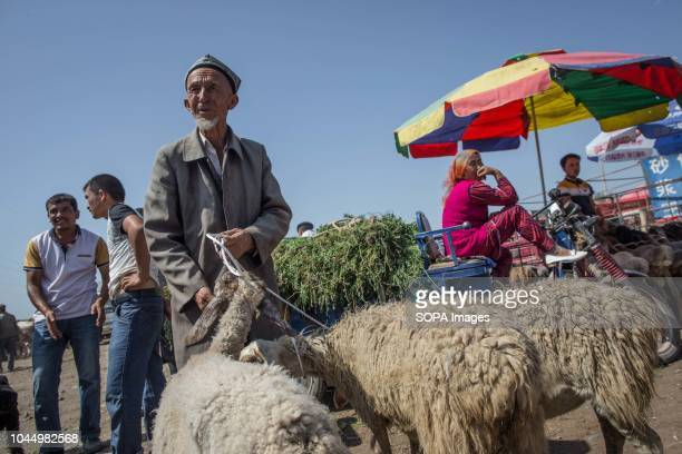 Uyghur farmer with his sheeps waits for customers at a livestock market in Kashgar city northwestern Xinjiang Uyghur Autonomous Region in China The...