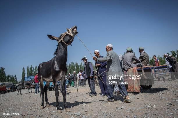 Uyghur man with his donkey walks through the Bazaar to look for customers at a livestock market in Kashgar city, northwestern Xinjiang Uyghur...
