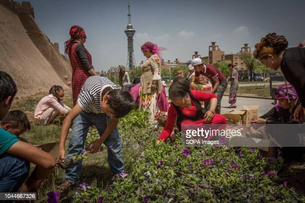 Uyghur women seen planting flowers near the entrance of the Kashgar old town, northwestern Xinjiang Uyghur Autonomous Region in China. Kashgar is...