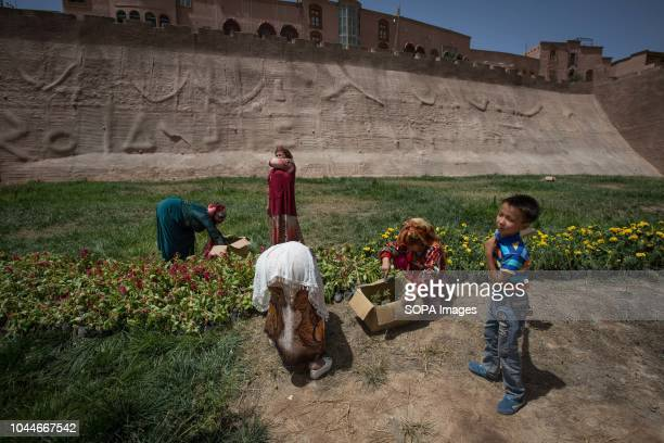 Uyghurs women seen planting flowers front of the Kashgar old town wall that separate the old to the new city in Kashgar, northwestern Xinjiang Uyghur...