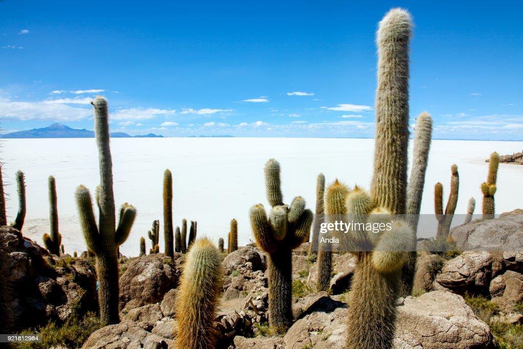 salt flat Salar de Uyuni, former island Isla Incahuasi (Inkawasi or Inka Wasi) and cactus.