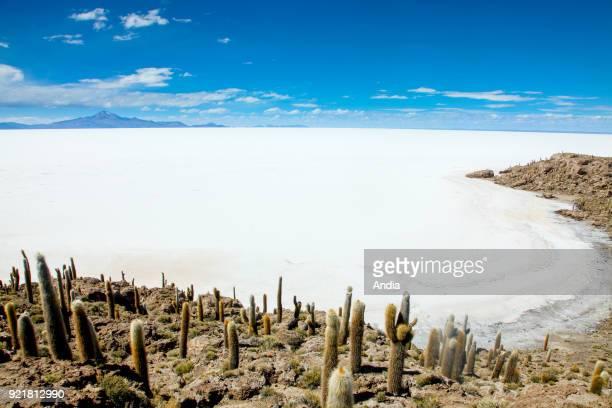 salt flat Salar de Uyuni former island Isla Incahuasi and cactus