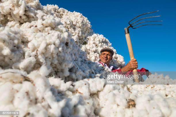 Uzbek cotton farm