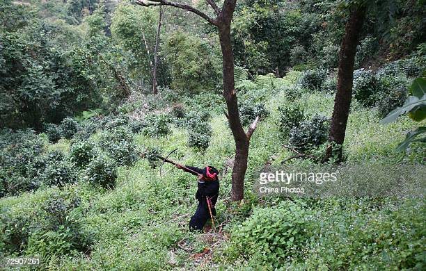 A Va ethnic minority man hunts birds with a crossbow at the Wengding Village December 30 2006 in Cangyuan County of Yunnan Province China There are...