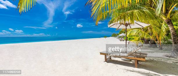 vacation holidays background panorama. two beach lounge chairs under tent on beach with palm trees, peaceful beach nature - pazifikinseln stock-fotos und bilder