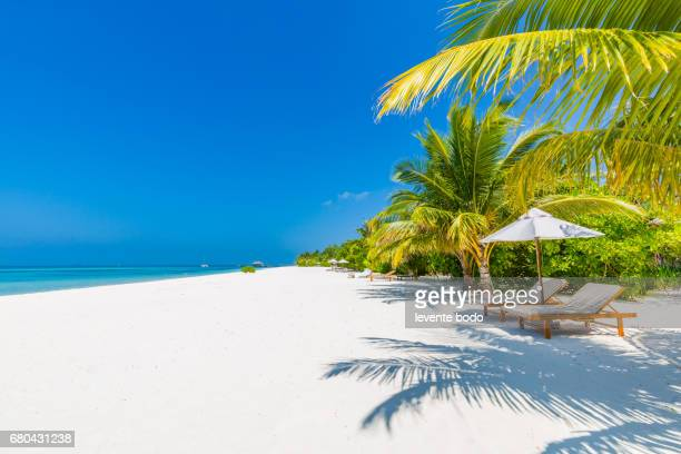 Tropical Pattern Stock Photos And Pictures