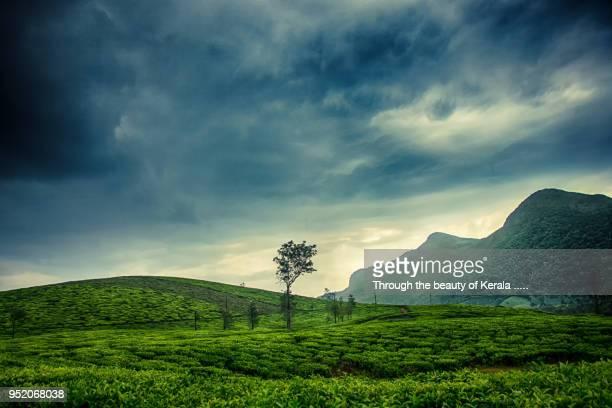 vagamon 2 - paisajes de india fotografías e imágenes de stock
