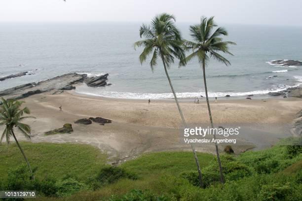 vagator beach, goa, green fresh palm trees - argenberg fotografías e imágenes de stock