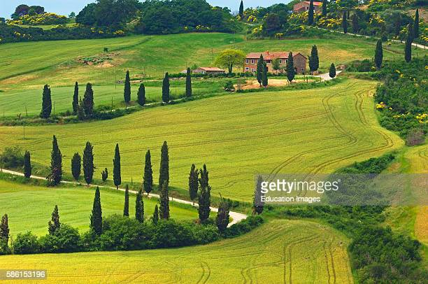 Val d'Orcia, Orcia Valley, Farm with cypress trees, Fields and Farmhouses, Tuscany Landscape, UNESCO world heritage site, Montichiello, Siena...