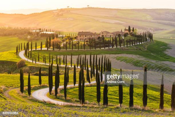 valdorcia, siena, tuscany. road of cypresses in a farmhouse at sunset - siena italy stock photos and pictures