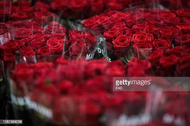 fiori di rosa di san valentino al mercato del giardino - mazzo di rose foto e immagini stock