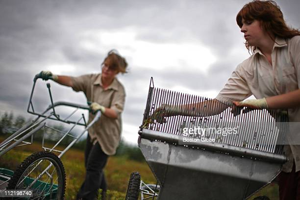 AUGUST 14 Valerie Maltais and her sister Myriam Maltais use a handpushed machine to harvest blueberries at the in the Lac St Jean region of Quebec