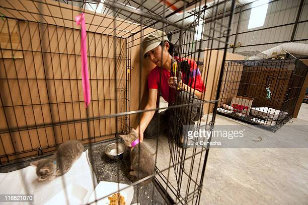 Valerie Mizuhara pets a kitten at the Joplin Animal Adoption and Rescue Center on June 17 in Joplin, Missouri. Mizuhara, who is the shelter manager...