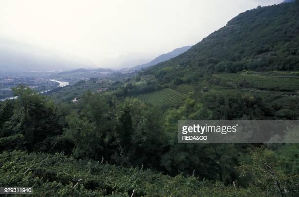 Vallagarina vineyard Rovereto Trentino Italy