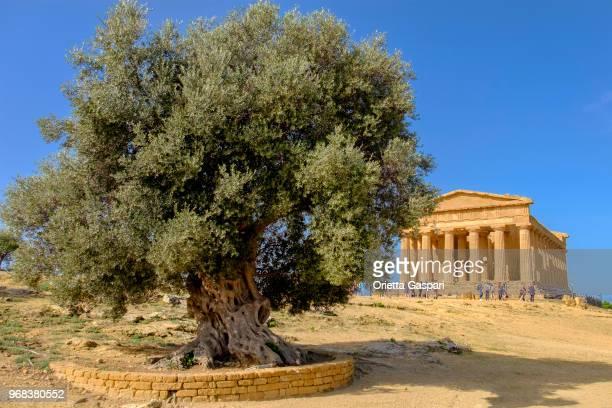 Valle dei Templi, Temple of Concordia (Sicily, Italy)