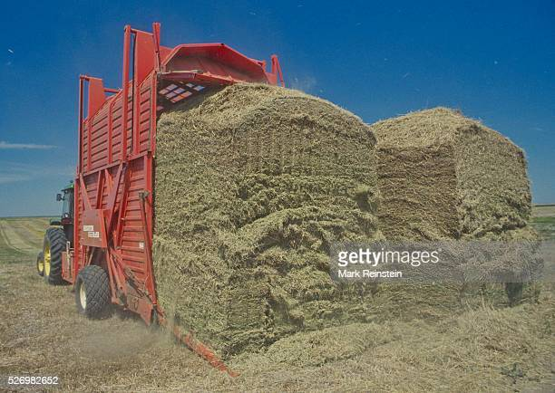 Valley City North Dakota 6261988 A large rectangular baler also known as a prairie raptor in use cutting hay outside of Valley City North Dakota A...