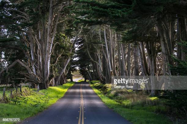 Valley Ford Road is lined by a forest of eucalyptus trees as viewed on February 10 near Valley Ford California After record winter rainfall battered...
