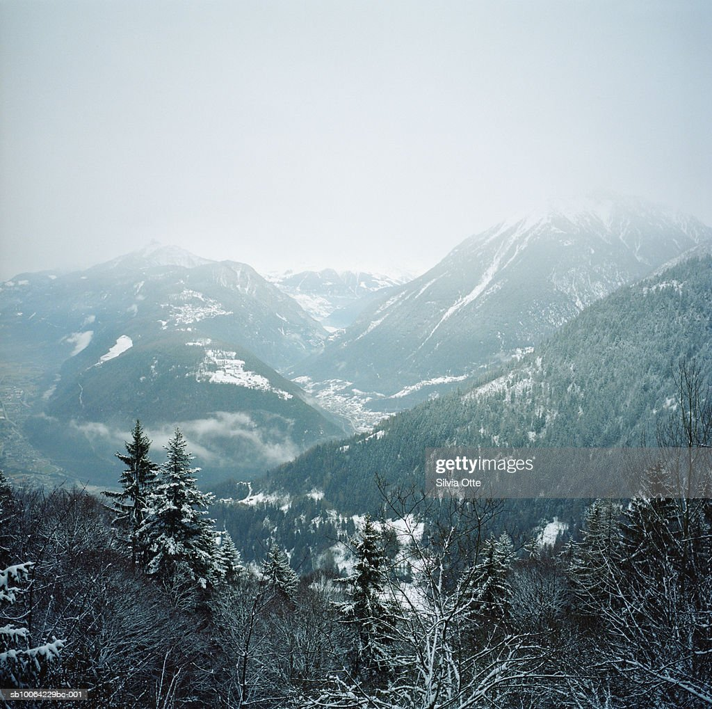 Valley forest in snow : Stock Photo