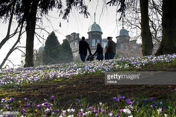 valley gardens harrogate england in spring - harrogate stock pictures, royalty-free photos & images