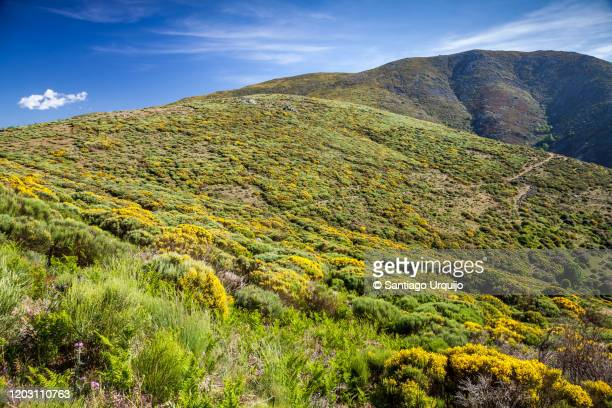 valley in blossom in honduras mountain pass - extremadura stock pictures, royalty-free photos & images