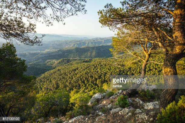 Valle en las montañas y dos árboles en primer plano