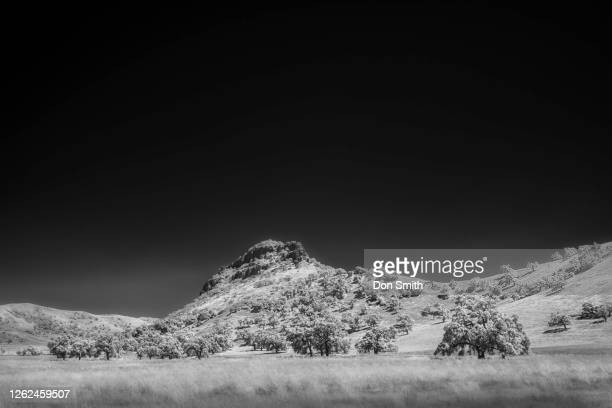 valley oaks and meadow in infrared - don smith stock pictures, royalty-free photos & images