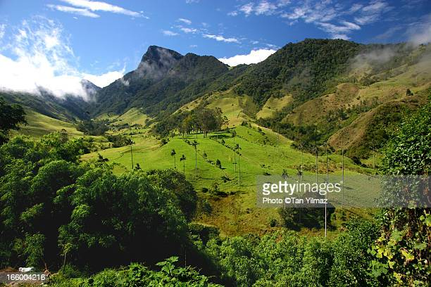 valley of cocora - colombia stock pictures, royalty-free photos & images