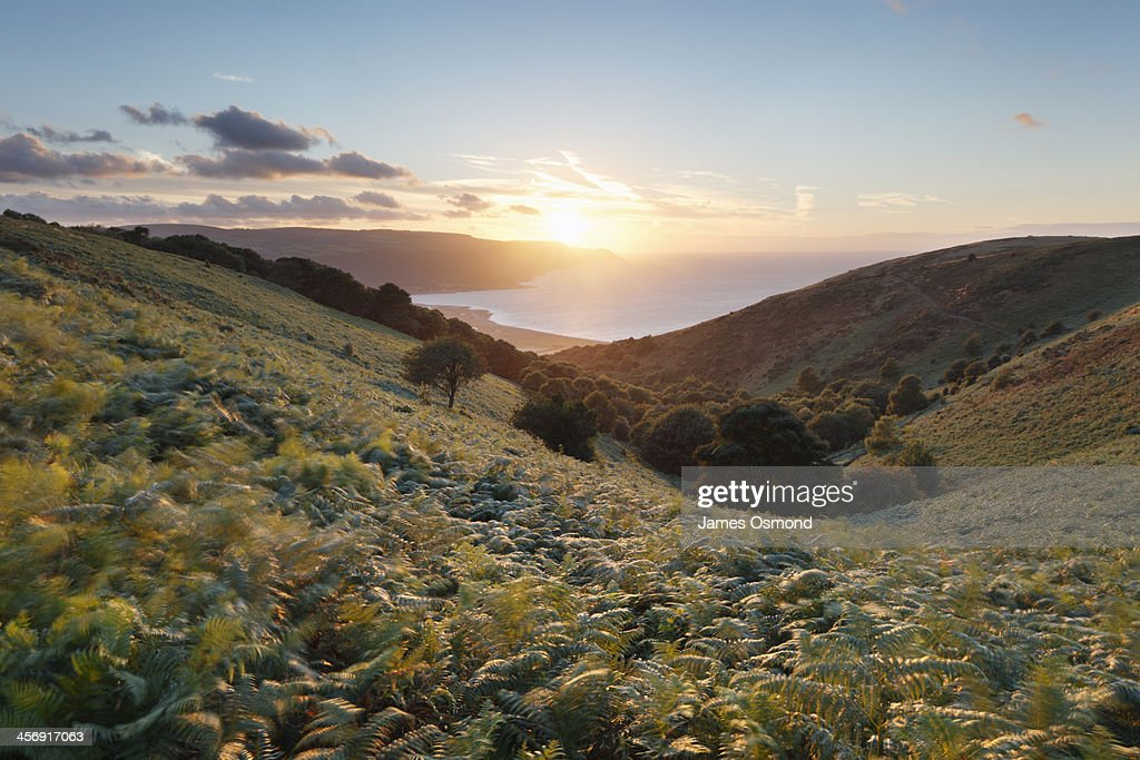 Valley of Ferns : Stock Photo