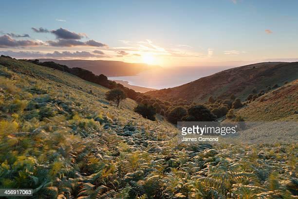 valley of ferns - exmoor national park 個照片及圖片檔