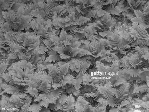 bw valley of ferns, wisconsin - vilas_county,_wisconsin stock pictures, royalty-free photos & images