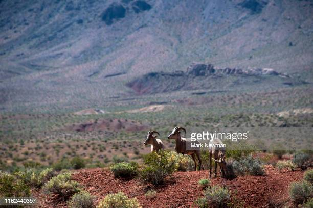 valley of fire state park - nevada stock pictures, royalty-free photos & images