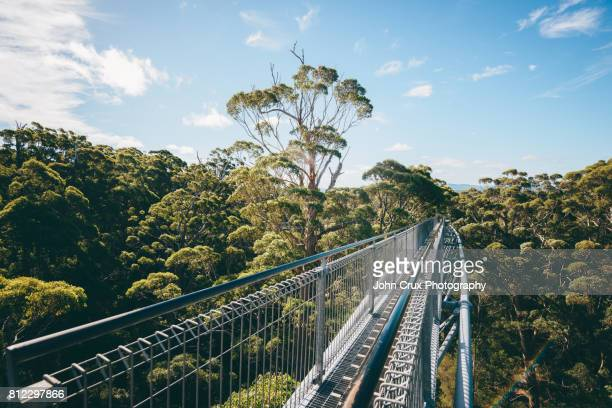 valley of the giants, australia - elevated walkway stock pictures, royalty-free photos & images