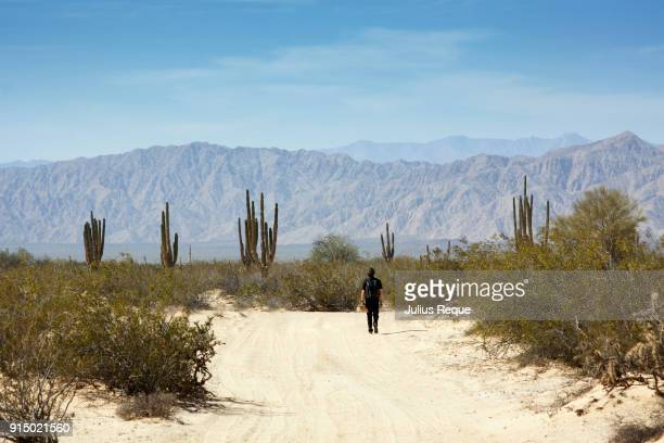 valley of the giants, bc mexico - estela grande fotografías e imágenes de stock