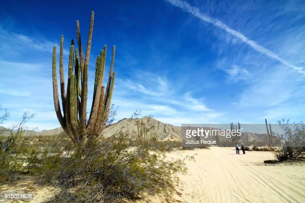 valley of the giants, mexico - estela grande fotografías e imágenes de stock