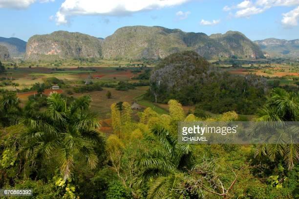 valley of vinales cuba - valle de vinales stock-fotos und bilder