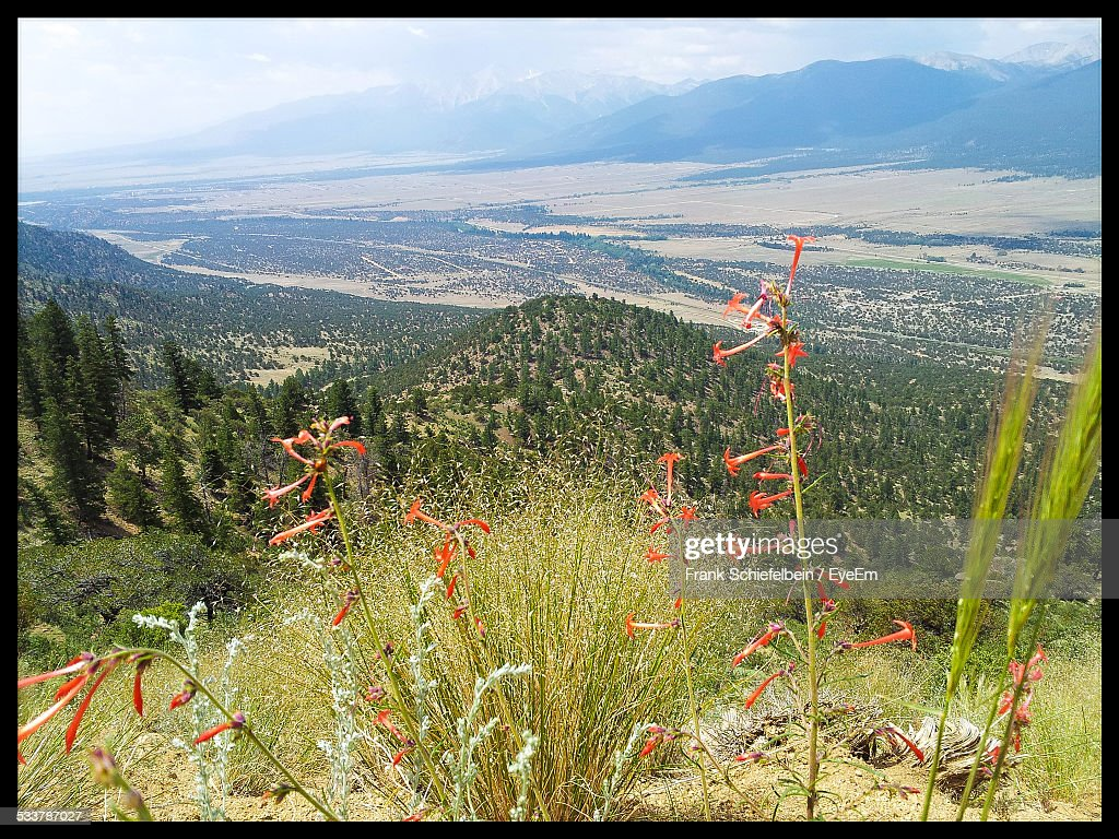 Valley Seen Through Wildflowers : Foto stock
